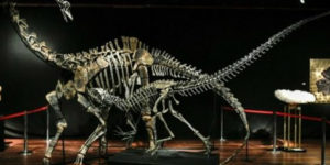 Dinosaur skeletons are the latest must-haves for your home