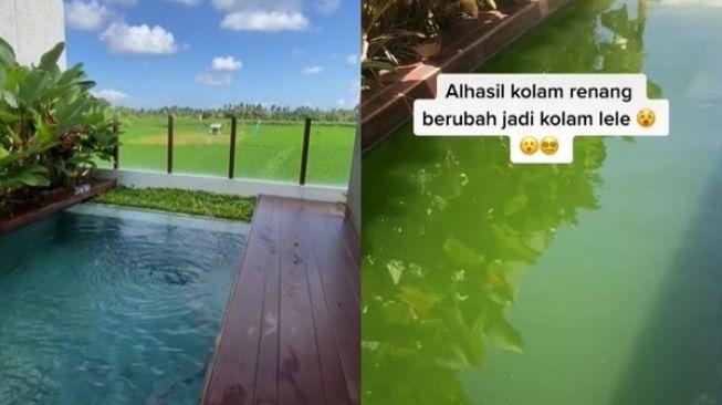 Viral kolam renang jadi kolam lele di vila setelah disewa selama 1 bulan. Video viral ini megejutkan banyak pihak. Ternyata ada sebab menyengutkan hingga kolam renang menjadi keruh selama 1 bulan disewa.