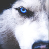 the_lone_wolf_