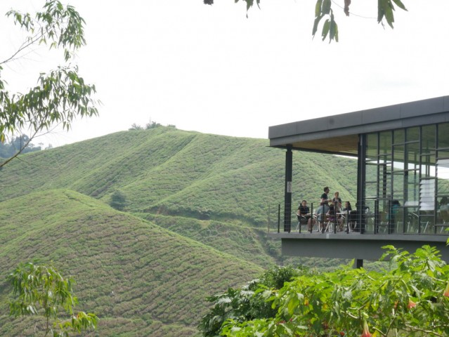 TEA WITH A VIEW. Best of Highlands tea plantation is the most popular tourist attraction in Cameron Highlands. Photo by Jona Branzuela Bering, InterAksyon.com.