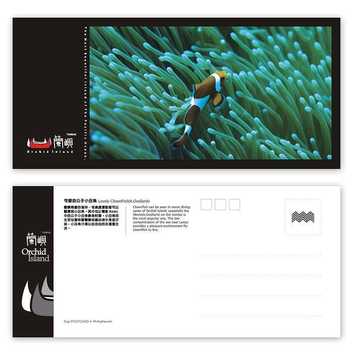 兰屿明信片 - 海洋系列(横) -可爱的公子小丑鱼