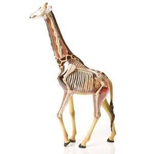 4d组合模型-动物系列-透视长颈鹿