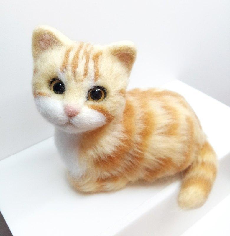 壁纸 动物 猫 猫咪 小猫 桌面 780_800
