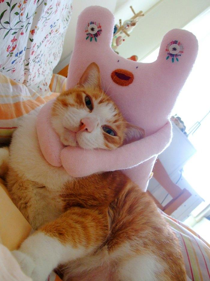 但自从领养了第一只猫「胖橘」后,才发现猫咪是这个世界最美丽的动物