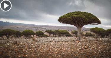 【世界之大】地球上的外星島國 神秘的索科特拉島