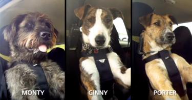 【反歧視】流浪狗學習開車做宣傳,希望人們從此不再輕視牠們!
