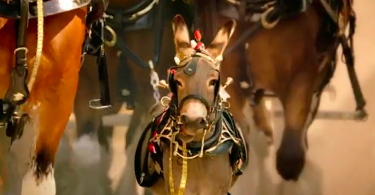 【永不放棄】克萊茲代爾拖車驢