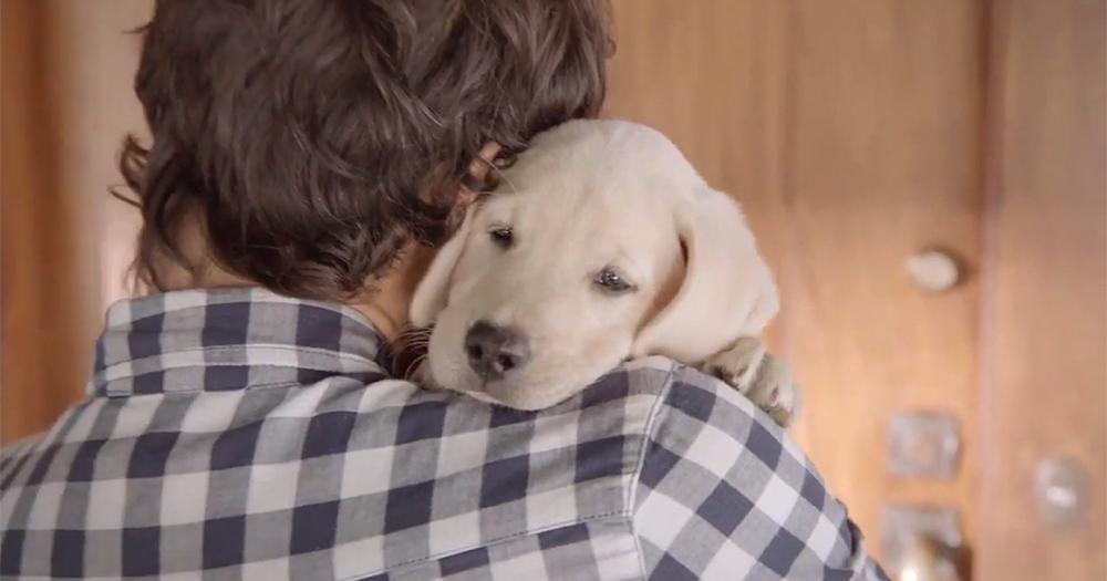 【寵物情緣】牠們是最忠心的朋友 永遠最愛賴著你