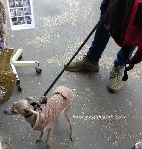 dog Rome