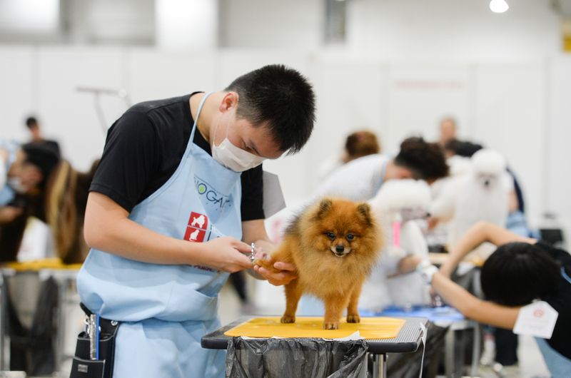 singapores-child-check-out-these-events-in-april-2019-pet-expo