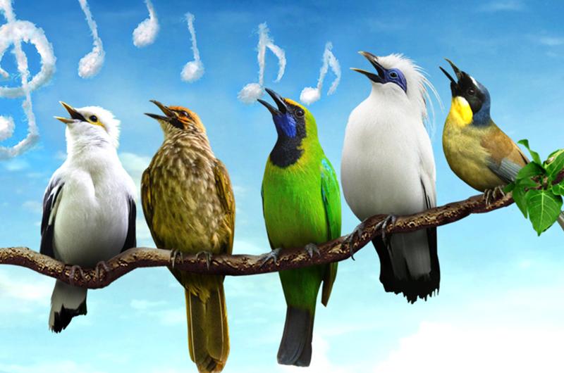 06-Jurong-Bird-Park