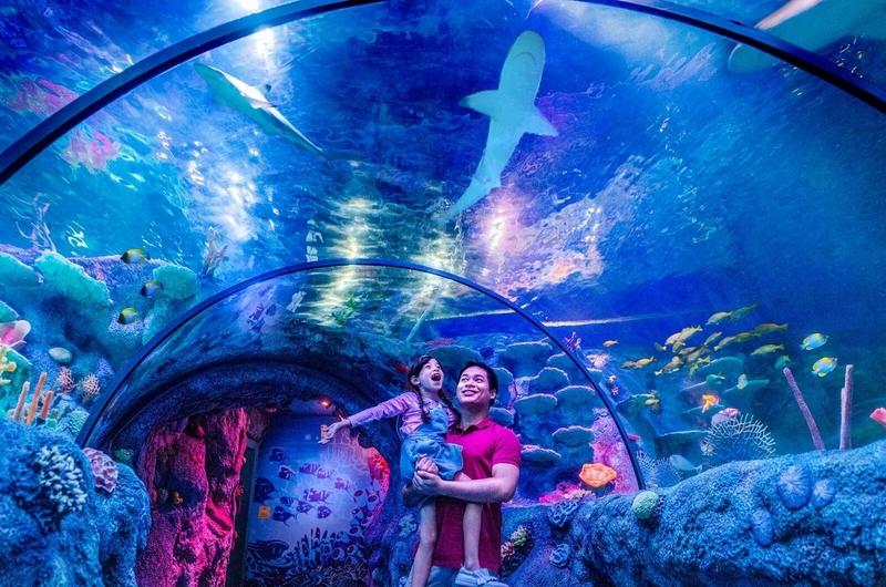 singapores-child-august-2019-events-sealife-malaysia