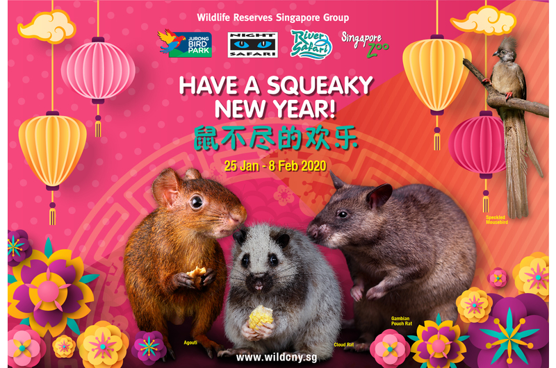 singapores-child-share-the-love-this-february-with-these-must-attend-events-wildlife-reserves