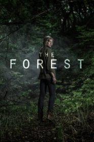 The Forest (เดอะ ฟอเรสต์)