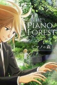 Forest of Piano (วัยกระเตาะ ตึ่ง ตึง ตึ๊ง)