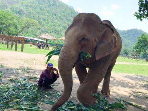 Elephant Nature Park4