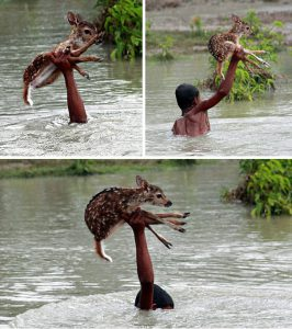 2-Heroic Boy Risks His Life To Save A Drowning Baby Deer