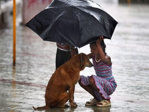 10-Girl Protects Stray Dog With An Umbrella During Monsoon Rains