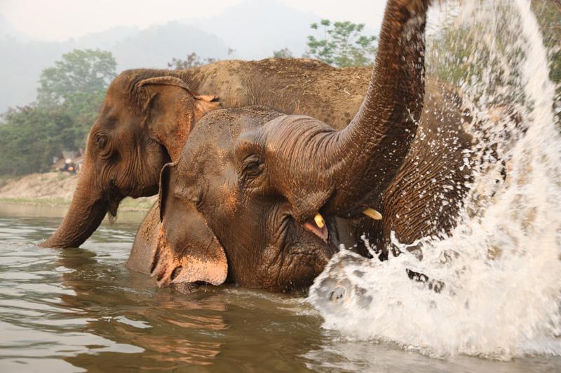 เล่นน้ำกันสนุกสนานเชียว!