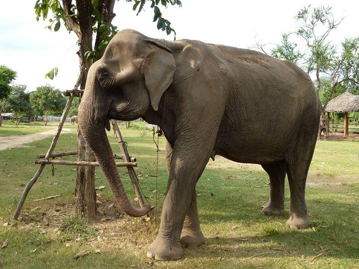 ช ช้าง ชรา พังบุญเรือง