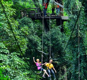 Zipline Canopy Adventure in Chiangmai Flight of the Gibbon