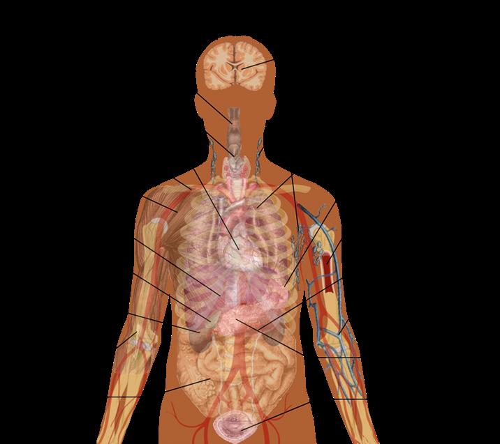 human body parts anatomy. human body parts anatomy. human body, Human Body