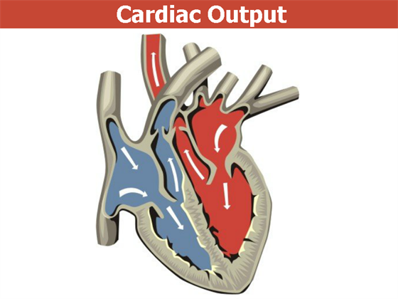 Cardiac Output : Cardiac Output Monitoring & Factors Affecting ...