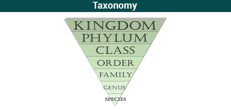 taxonomy classification