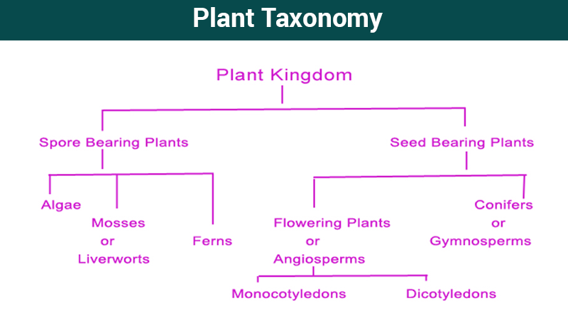what is taxonomy kingdom biological diversity