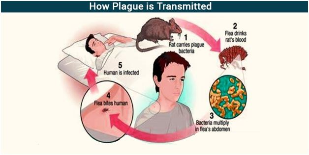 an analysis of common symptoms and treatment methods in patients infected with the bubonic plague Chapter 20 microbiology and vector control are all methods used to control the plague during do not suspect anthrax when patients with symptoms because.