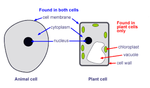 Plant cell vs animal cell cell structure biology