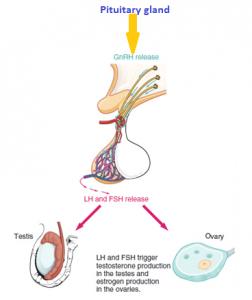 biopsy of vulva