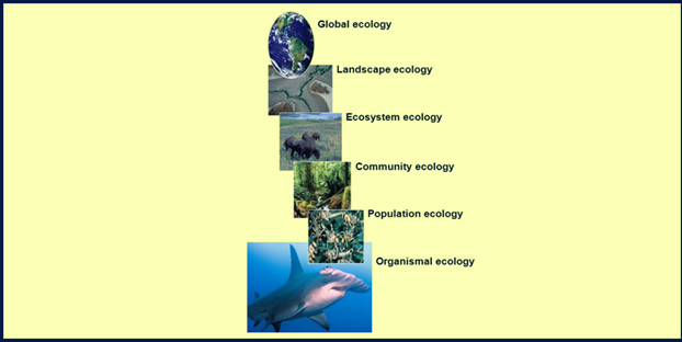 Ecological study levels
