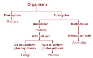 Basis Of Biological Classification | Fundamental Characteristics