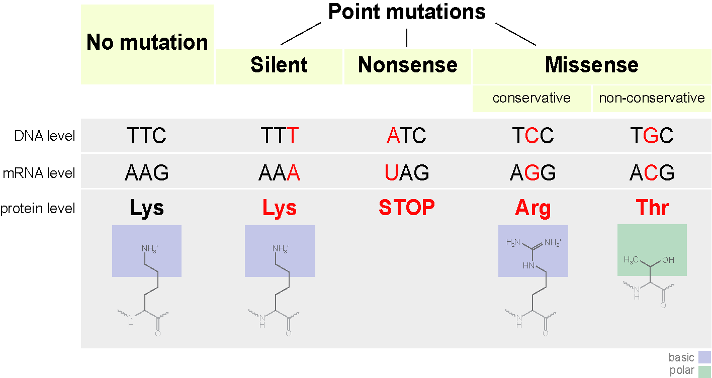 Genetic Mutation - Causes and Types Of Mutation