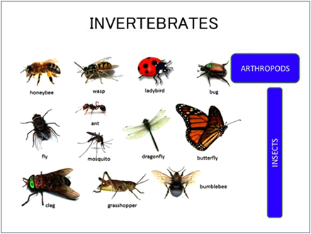 Invertebrates - Types of Invertebrates | Characteristics ...