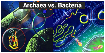 similarities and differences bacteria vs archaea The bacteria and archaea have been grouped together and called prokaryotes the differences among bacteria, archaea part of microbiology for dummies cheat.