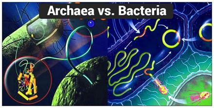 Výsledok vyhľadávania obrázkov pre dopyt archaea