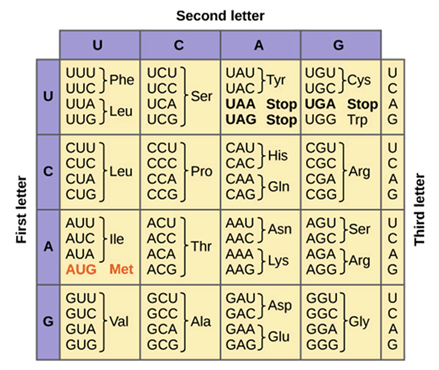 Genetic Code | Properties of Genetic code table and Exceptions