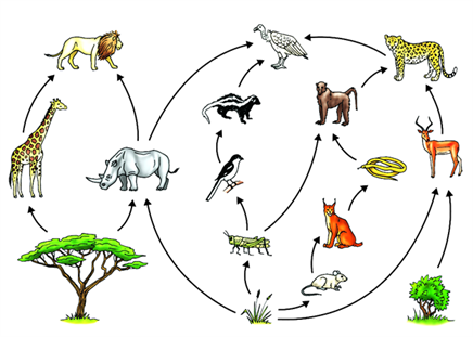 food web producers primary secondary and tertiary