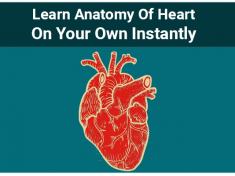 Anatomy of Heart