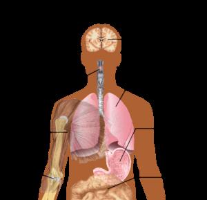 H1N1 33 deaths