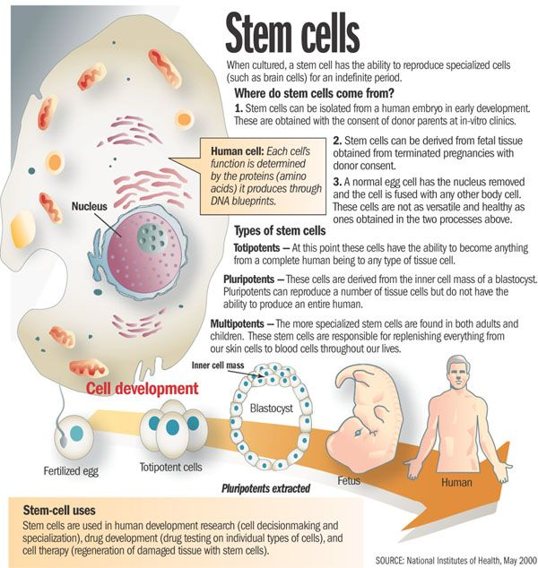 human stem cell research a discussion