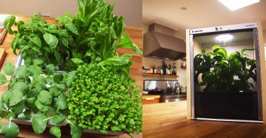 【都市人的小綠洲】微型農場Nanofarm:讓你在家中也能夠品嚐新鮮蔬菜