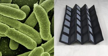 【細菌發電】紐約賓漢頓大學研發可降解「生物電池」 ,用微生物為生物感應器發電