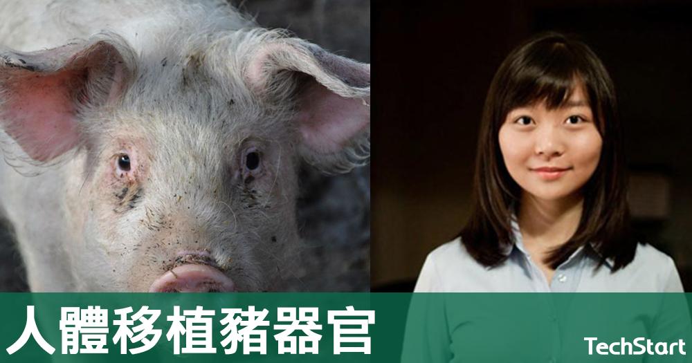 【人豬合一?】誓讓人類移植豬器官,基因改造初創獲3800萬美元融資