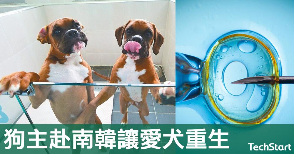 【死而復生?】10萬美元複製狗暢銷全球,狗主赴南韓讓愛犬「重生」