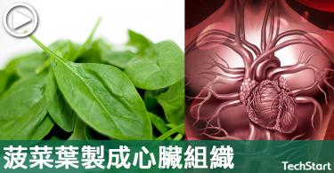 【神奇醫學】與人類心臟血管相近,科學家用菠菜葉製心臟組織