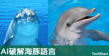 【海豚的秘密】瑞典科創與大學合作,希望用AI破解海豚語言