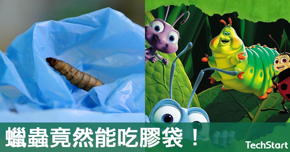 【蟲蟲救地球】或成塑膠污染救星,科學家發現蠟蟲能吃膠袋